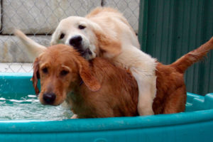 happy-tails-dog-kennel-nj
